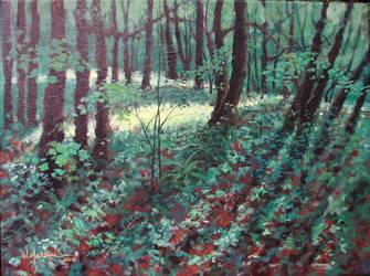 Forest Understory Light by Caddisman
