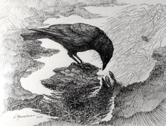 Crow by Caddisman