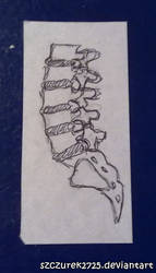 lumbar spine scetch