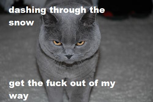 Grumpy Cat by lexi-4