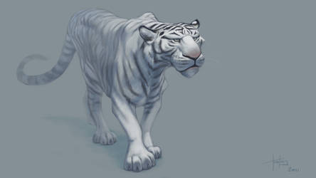 White tiger by MrTomLong