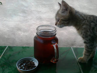 The Cat Loves It Too by k-dsan