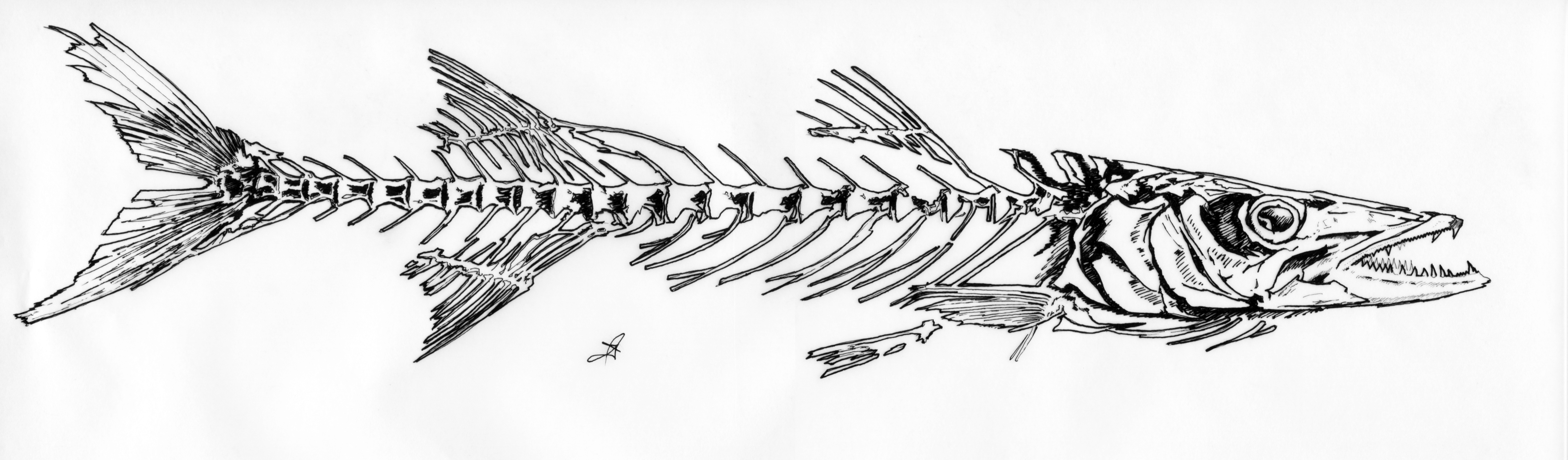 how to draw cartoon fish bones