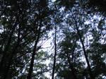 Tree tops 2