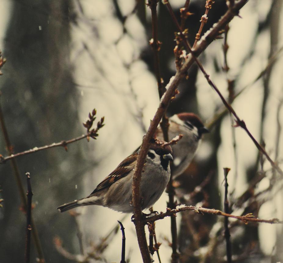 Birds. by basia944