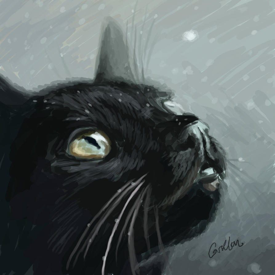 First Snow by Griffin-Fire