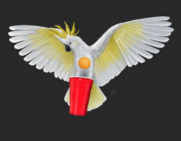 Beer-Pong  Cockatoo