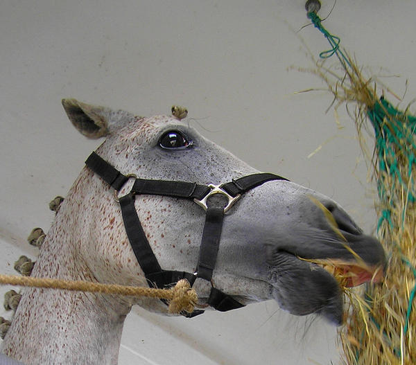 Pepper Horse by Jenvanw