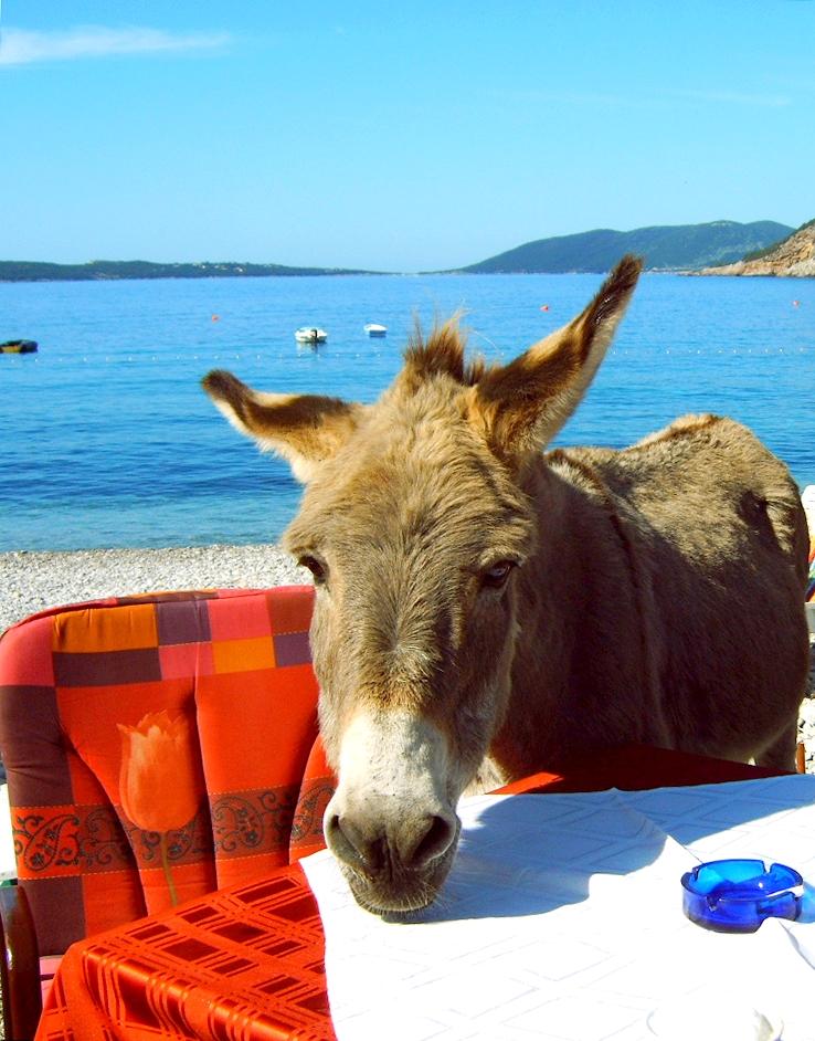 Nosy Donkey Montenegro by Jenvanw