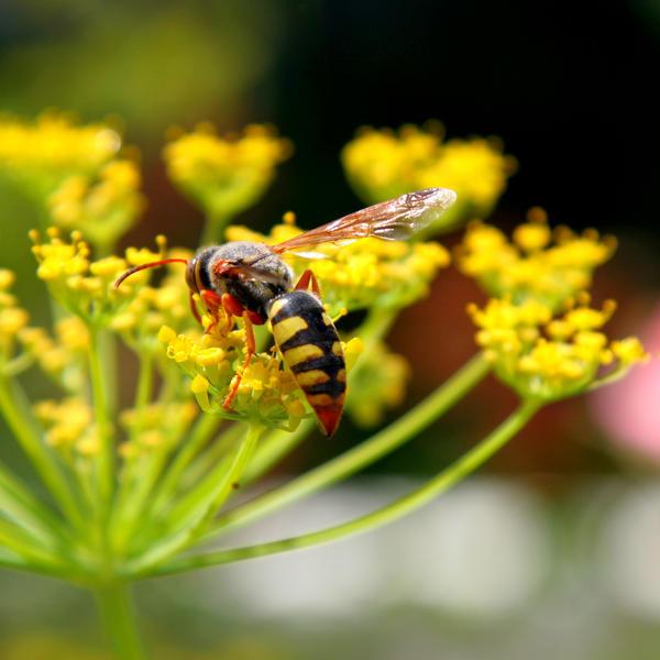 Bee Flower SA I by Jenvanw