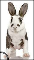 Dolly the docile dobbit by HumanDescent
