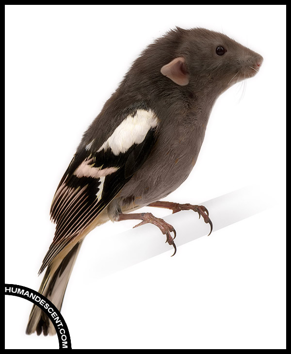 Birdat by HumanDescent