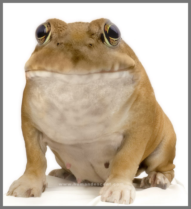 BullDogfrog