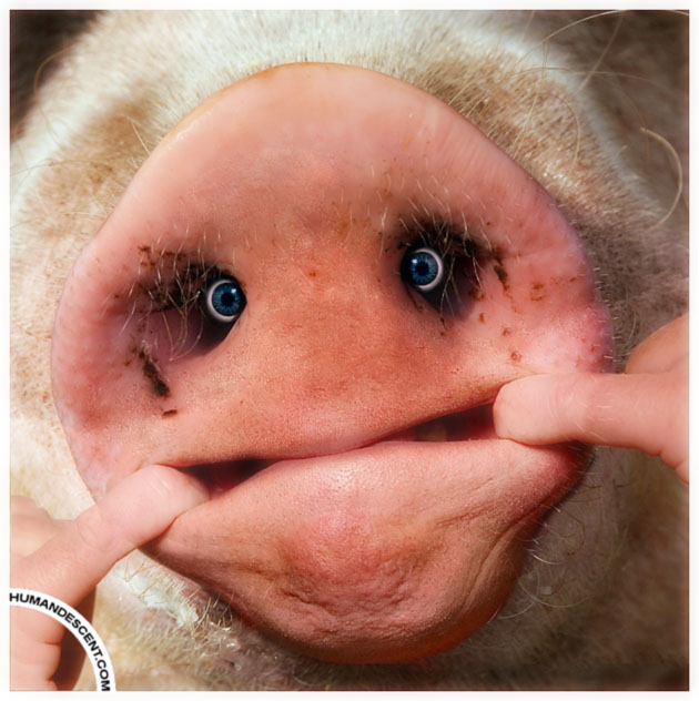 Snout face by HumanDescent