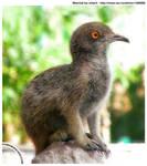 Meergeon or Pigkat