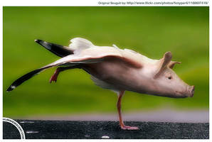 Pig gull by HumanDescent