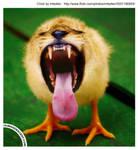 lion + chick equals Lick