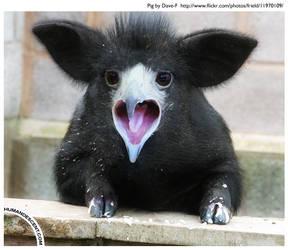 Pigbird