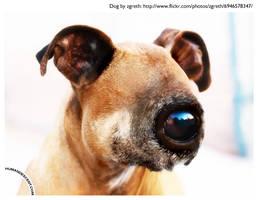 All seeing eye dog