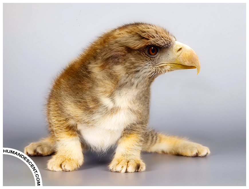 Eric the Eagat by HumanDescent