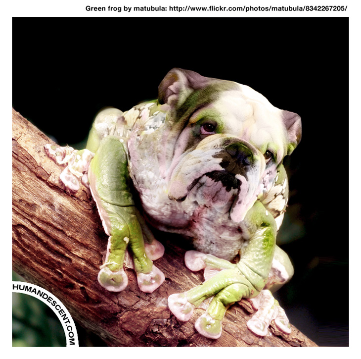 Ben the bullfrog by HumanDescent
