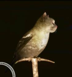 birdat in the dark by HumanDescent
