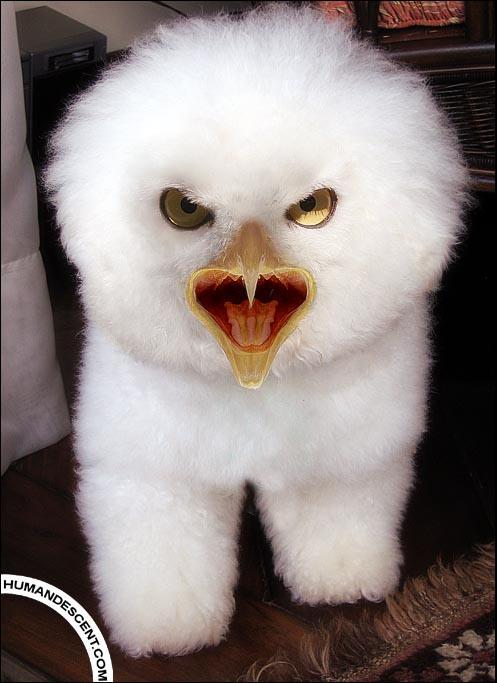 http://fc06.deviantart.net/fs8/i/2005/322/3/9/Meet_____Fluffy_by_HumanDescent.jpg