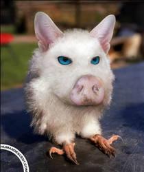 Piglatowl by HumanDescent