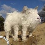 Sheepogat