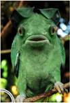 Parrogfish