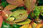 Rose scented rain by donnatello129