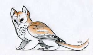 Owl Griffin color design