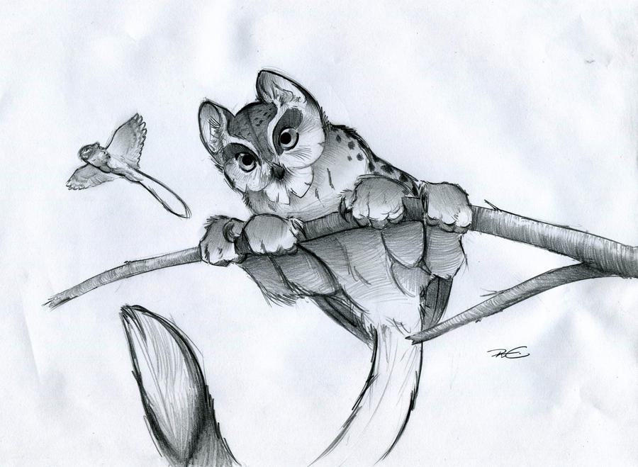 Arboreal Owl Faced Microgriffin By Robthedoodler On Deviantart