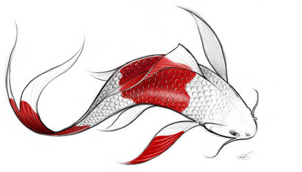 Koi by RobtheDoodler