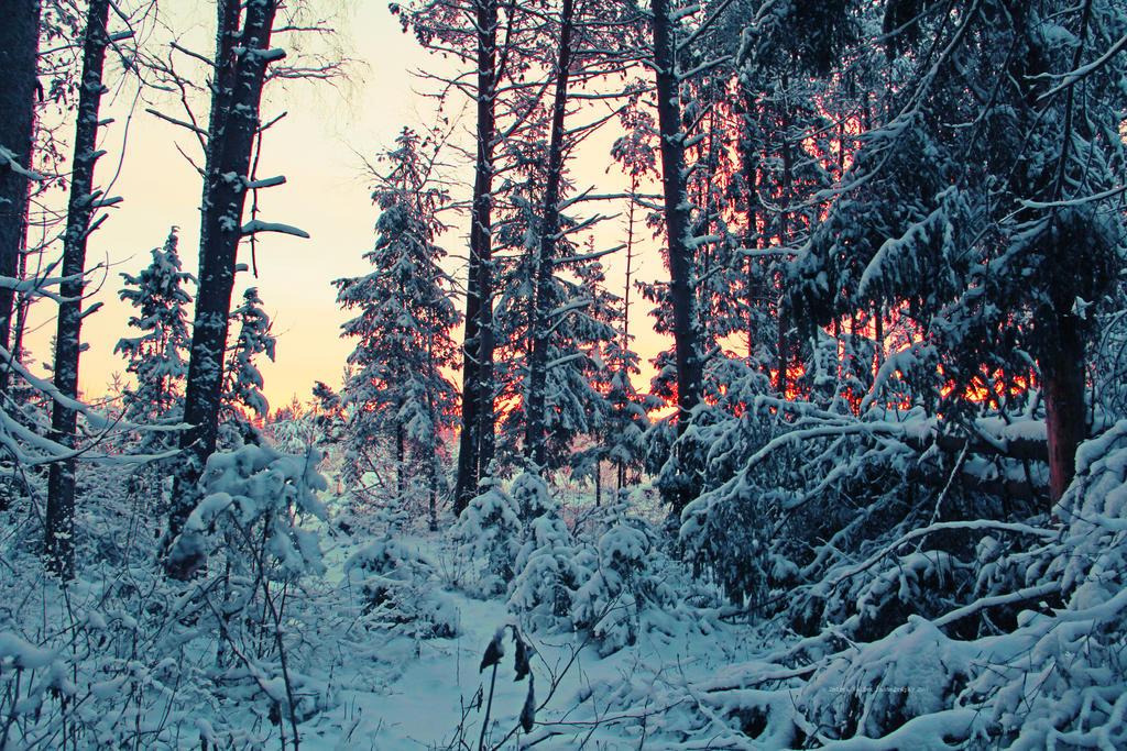 Morning lights by indrekvaldek
