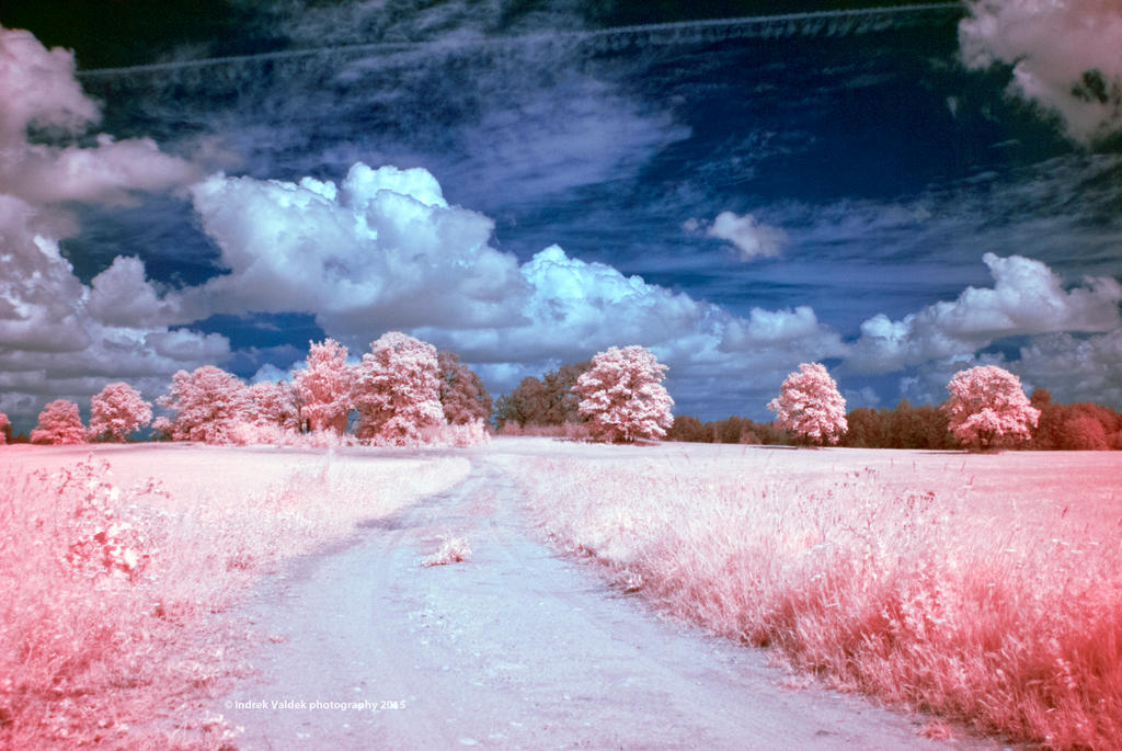 Infrared dreams by indrekvaldek
