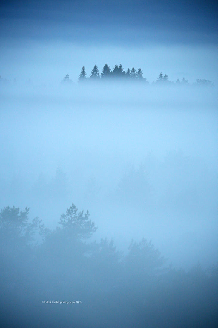 Estonian bog part II - The morning by indrekvaldek