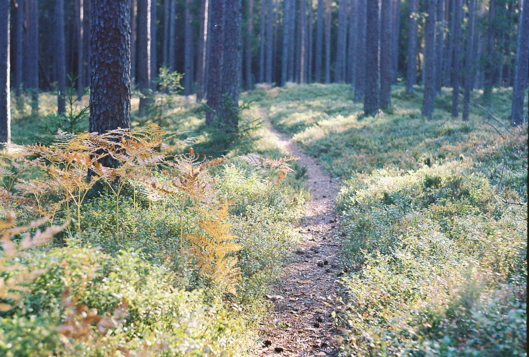 Forgotten paths - Zenit 11 part V by indrekvaldek