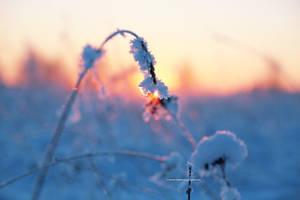 Frostbitten nature by indrekvaldek