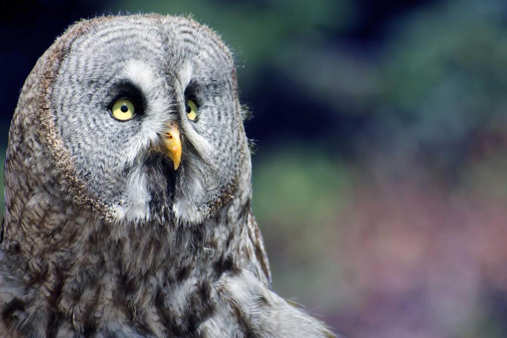Birds of Prey - Portrait V by DavaDs