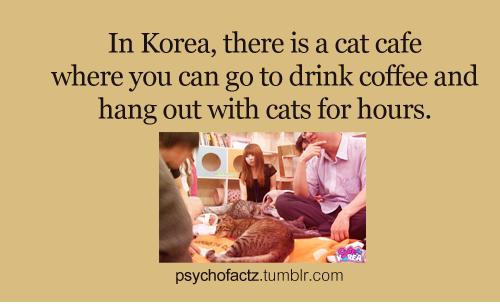 Cat Cafe by HisakoTheGeek67
