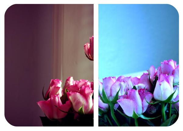 Seasons Colours by diamondsTwinkle18