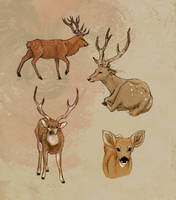 Deer study by Khaifer