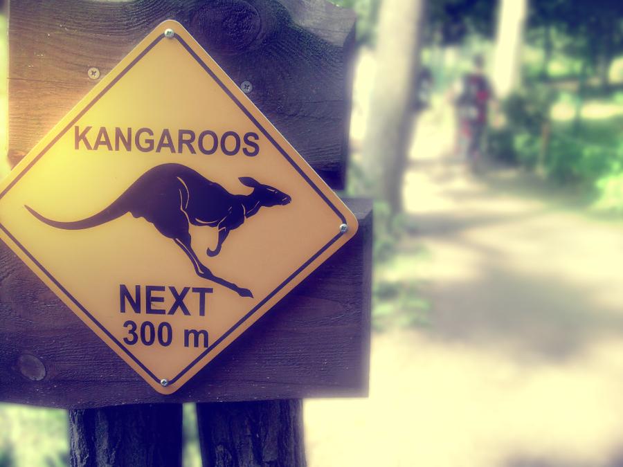 Kangaroos by NewX4
