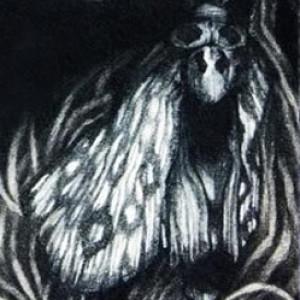 Envisualist's Profile Picture