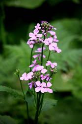 Green Lake - Flower