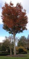 Matchstick Tree
