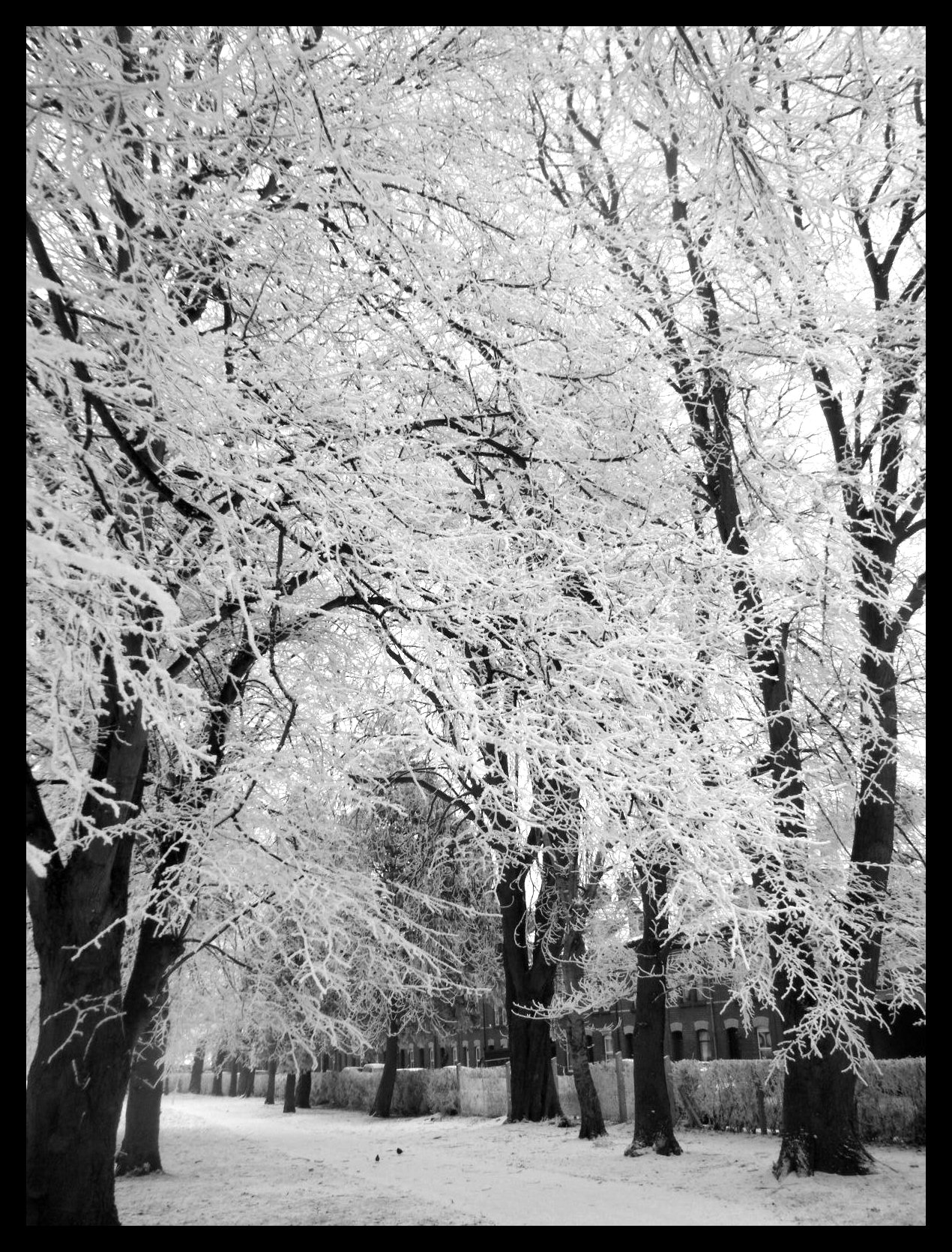 black and white snowy trees by supergurlkathryn on deviantart