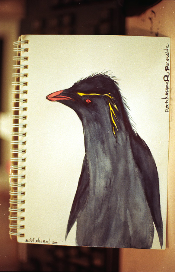Rockhopper Penguin by avivi