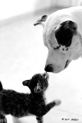 Sniff by avivi